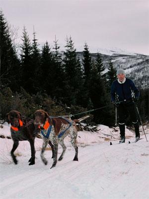 Med hunden på skitur