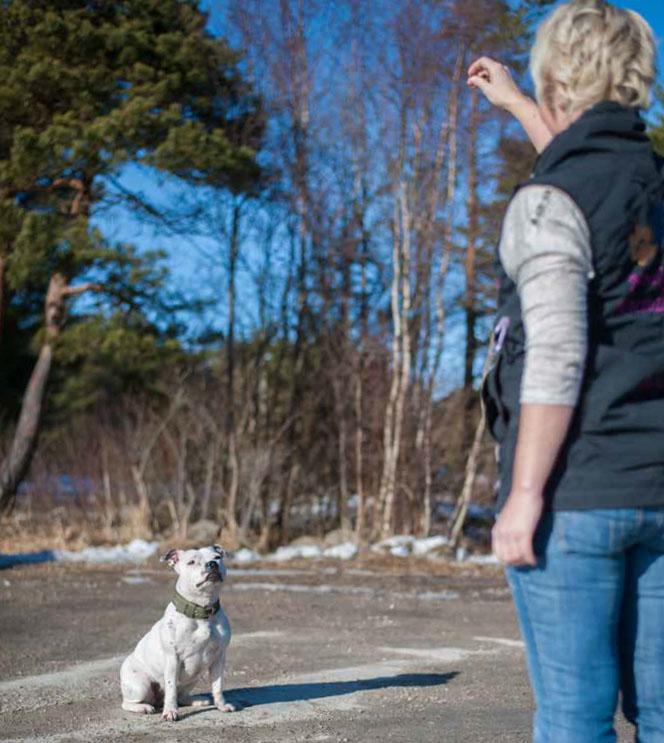 Tren på en plass som er er behagelig for hunden. Gjerne et sted det er tørt.