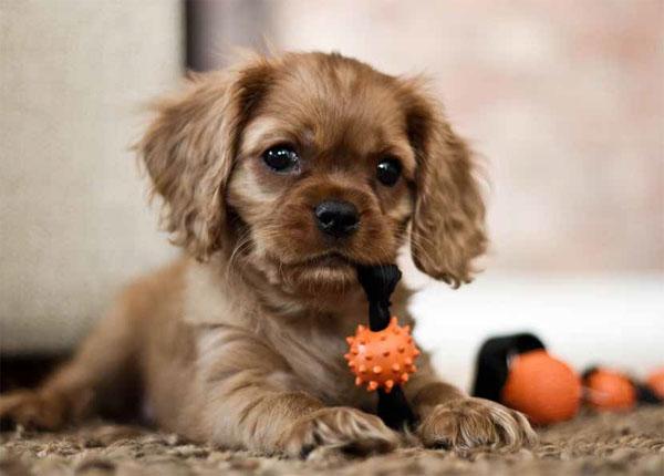 svindel-hund