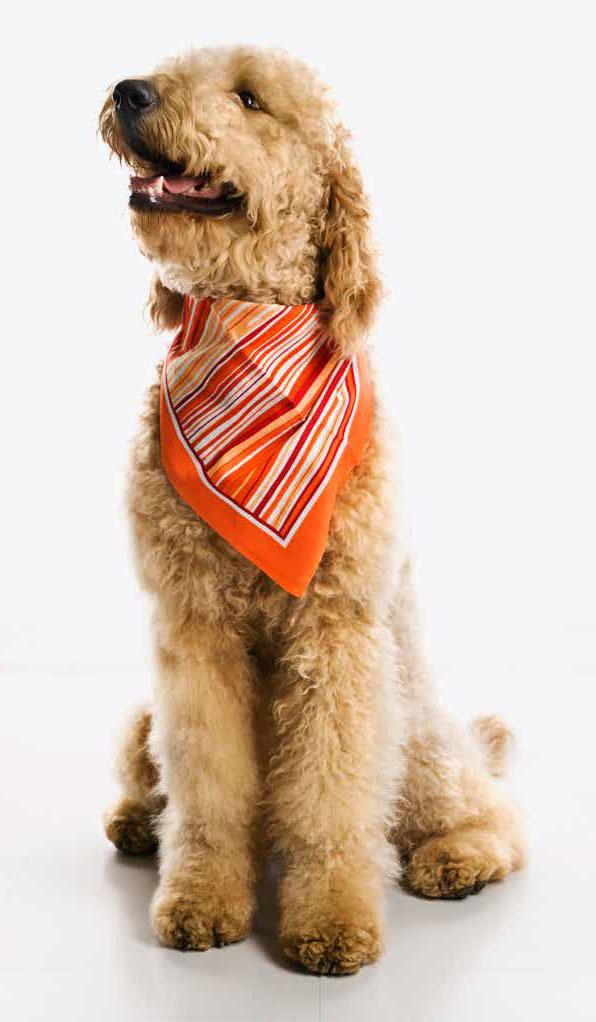 blandingshund