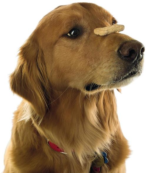 SELVKONTROLL: Å balansere en godbit slik som dette krever mye selvkontroll fra hunden din. En ypperlig øvelse å trene på.